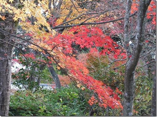 2016京都紅葉 338