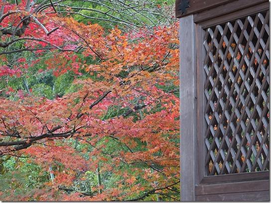 2016京都紅葉 342