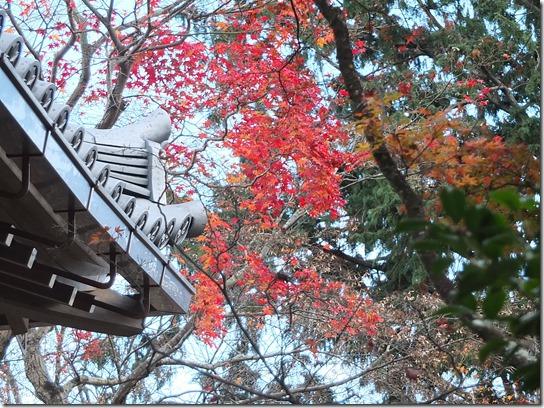 2016京都紅葉 346