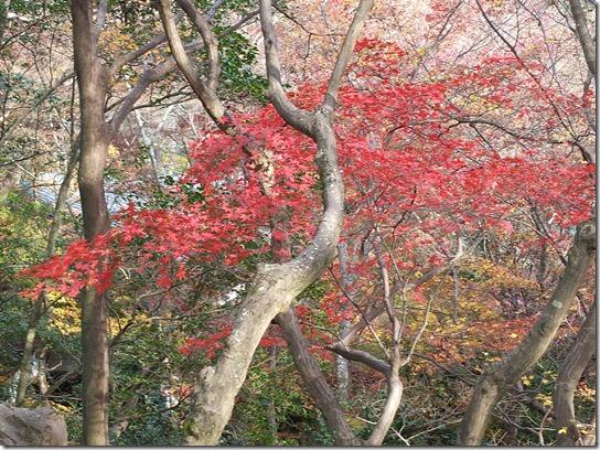 2016京都紅葉 350