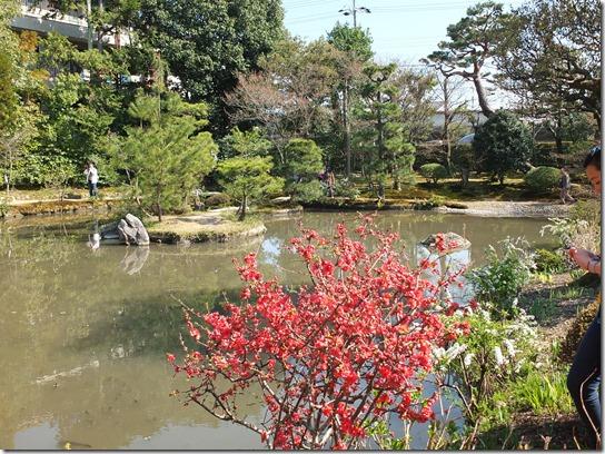 2017京都桜 350