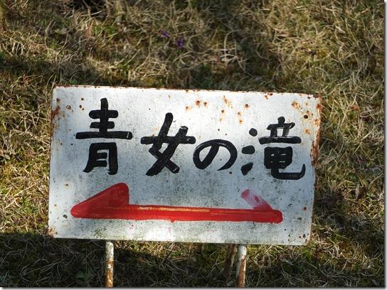 2017京都桜 352