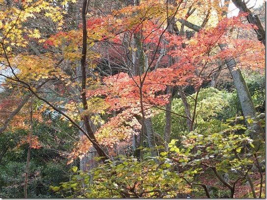 2016京都紅葉 353