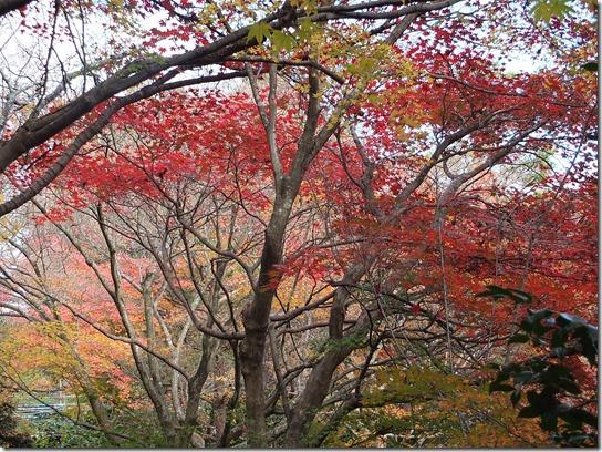 2016京都紅葉 357