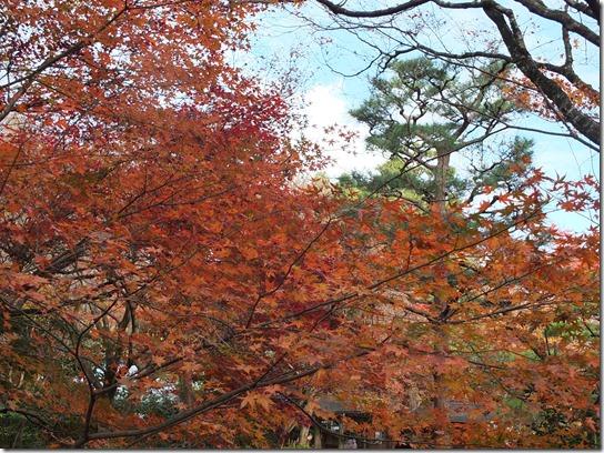 2016京都紅葉 359