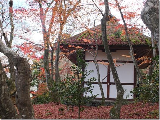 2016京都紅葉 360