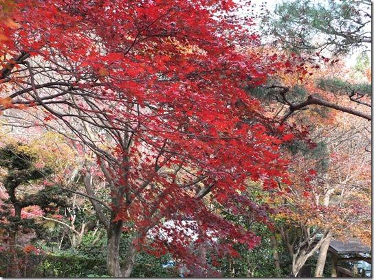 2016京都紅葉 361