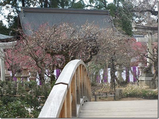 2017京都節分 366