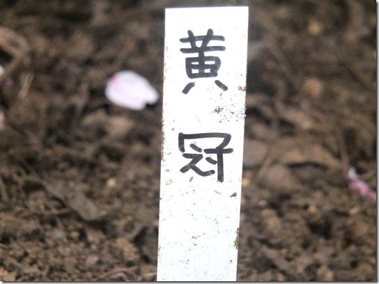 鎌倉 牡丹 桜 368