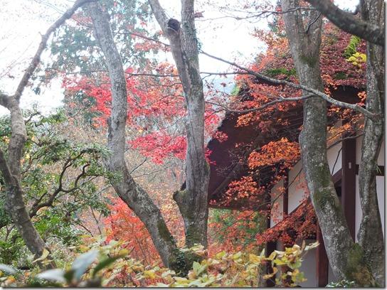 2016京都紅葉 369