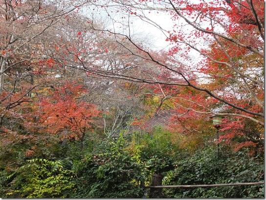 2016京都紅葉 370
