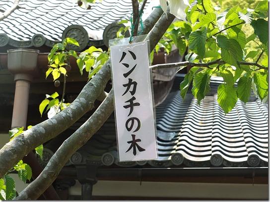 牡丹 関西 2017 371
