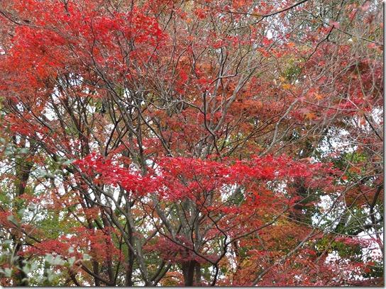 2016京都紅葉 375