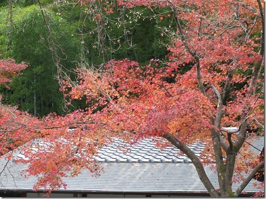 2016京都紅葉 377