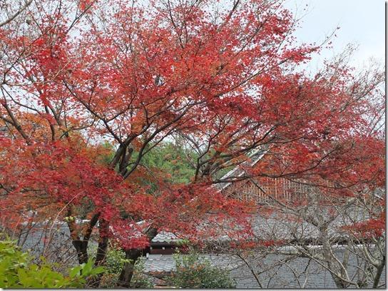 2016京都紅葉 378