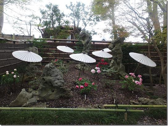 鎌倉 牡丹 桜 379