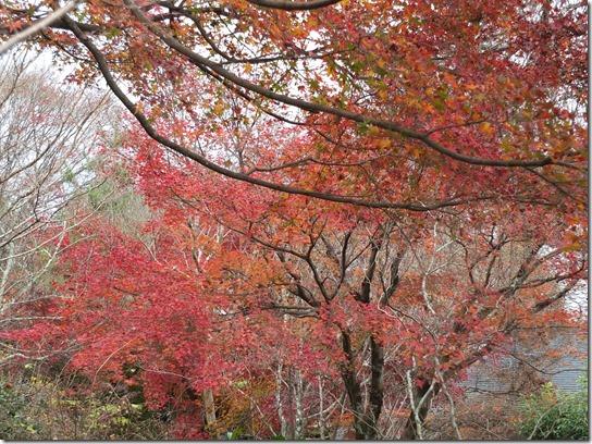 2016京都紅葉 381