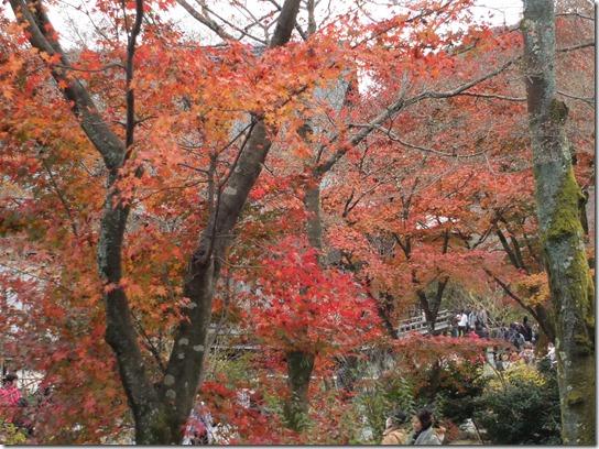 2016京都紅葉 382