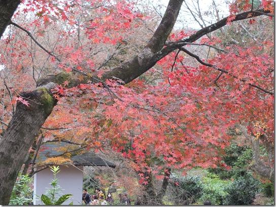 2016京都紅葉 383