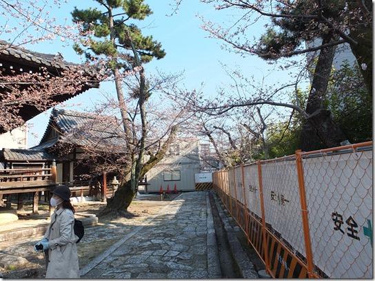 2017京都桜 383