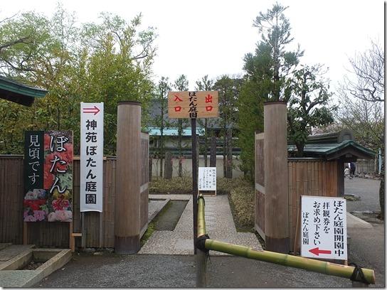 鎌倉 牡丹 桜 388