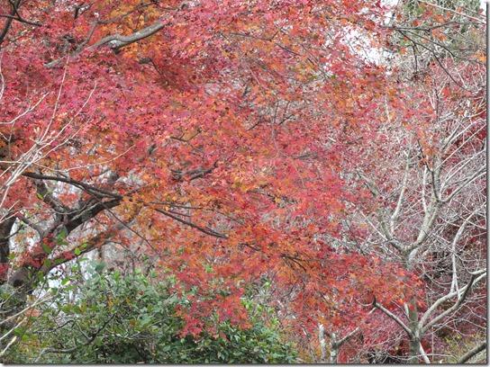 2016京都紅葉 389