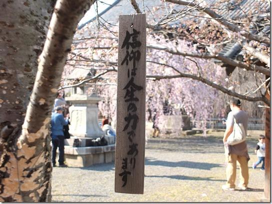 2017京都桜 392