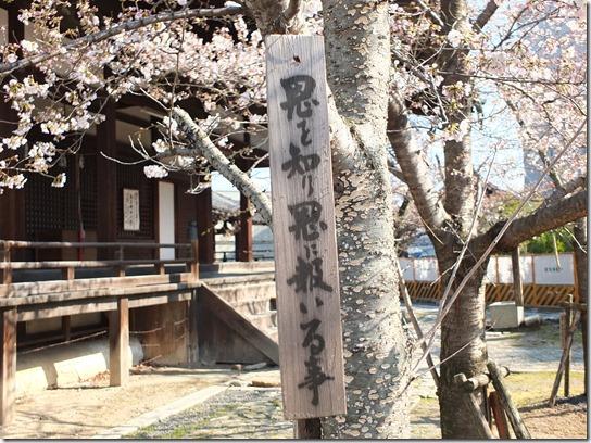 2017京都桜 393