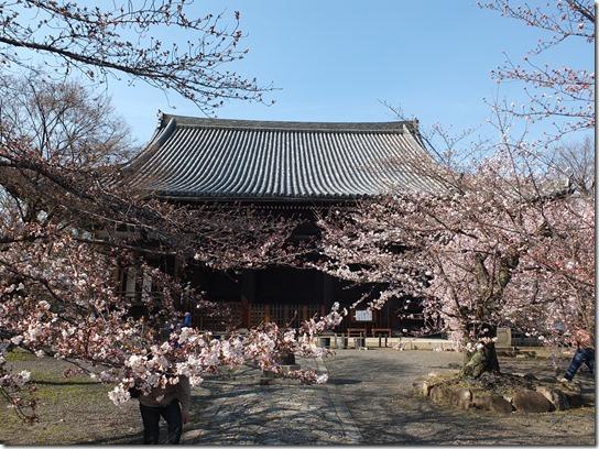 2017京都桜 400