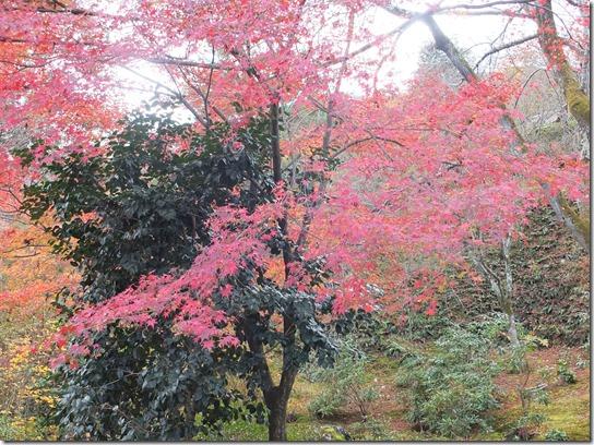 2016京都紅葉 401