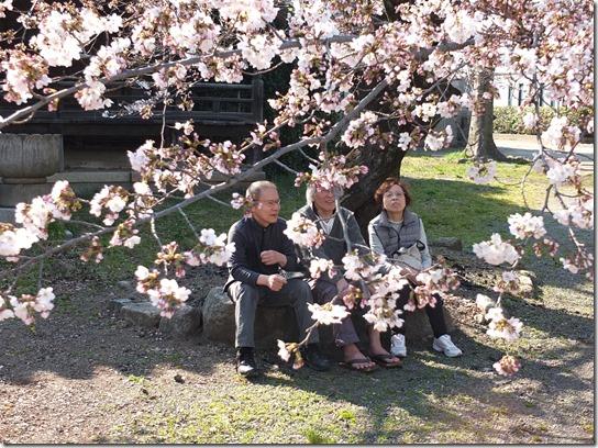 2017京都桜 402