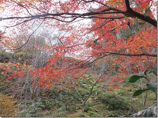 2016京都紅葉 411