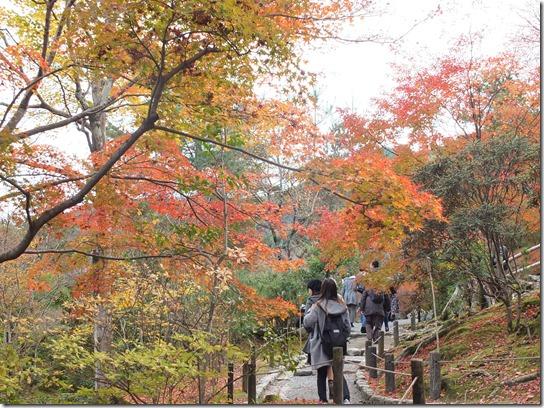2016京都紅葉 413