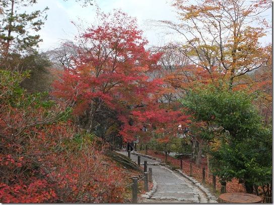 2016京都紅葉 420