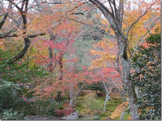 2016京都紅葉 427