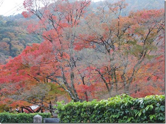 2016京都紅葉 437