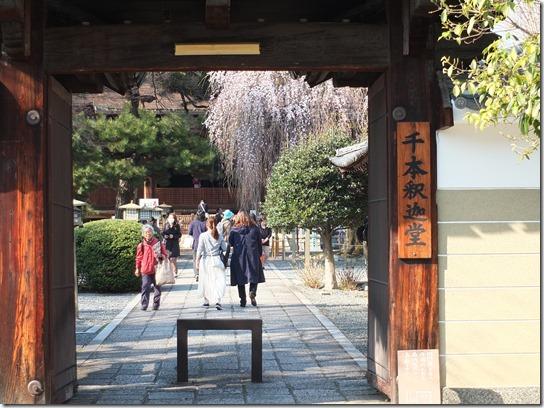 2017京都桜 447