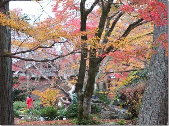 2016京都紅葉 451