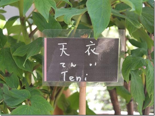 鎌倉 牡丹 桜 452