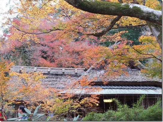 2016京都紅葉 453