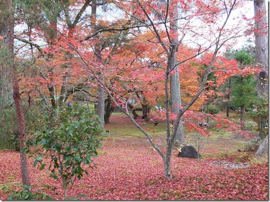 2016京都紅葉 456