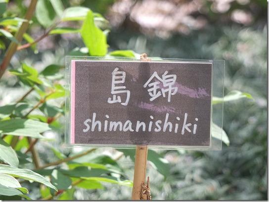 鎌倉 牡丹 桜 456