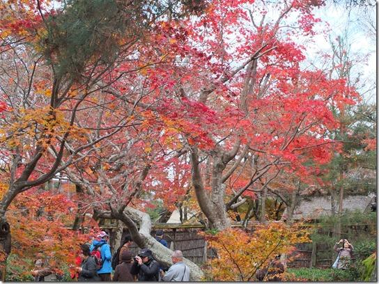 2016京都紅葉 460