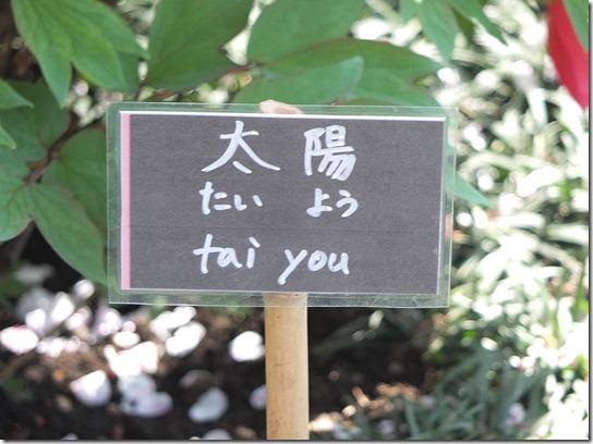 鎌倉 牡丹 桜 461