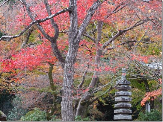 2016京都紅葉 463