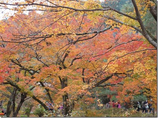 2016京都紅葉 465