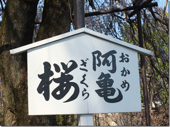 2017京都桜 472
