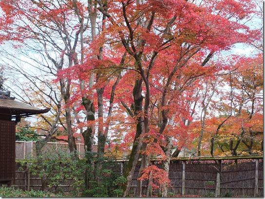 2016京都紅葉 477