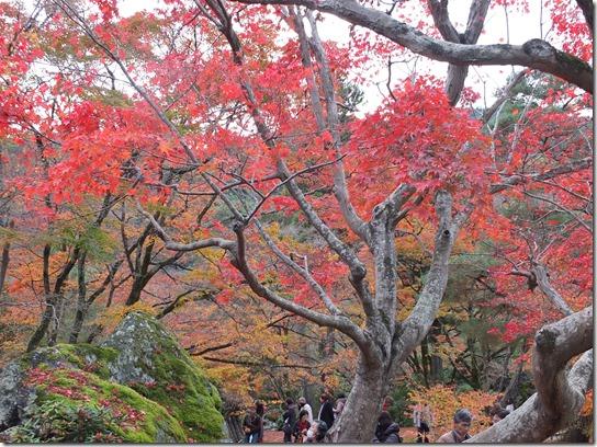 2016京都紅葉 479