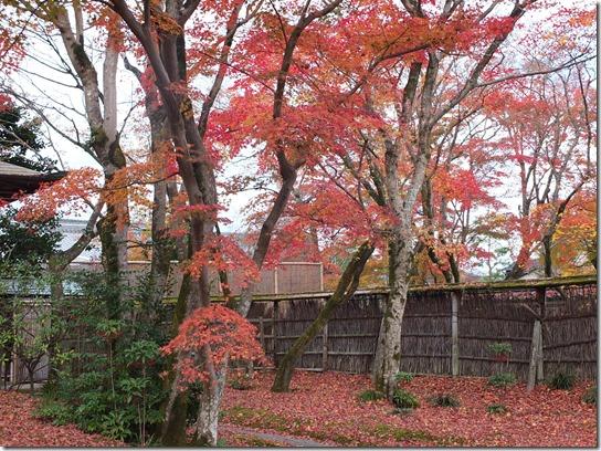 2016京都紅葉 480